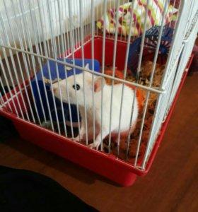 Крыса в добрые руки