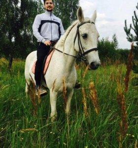 Конные Прогулки и Заказ Лошадей В Раменском