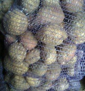 Картофель, капустный лист, морковь для животных