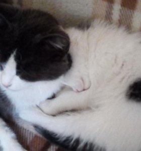 Котята в хорошие руки.