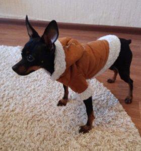 Одежда на маленькую собачку