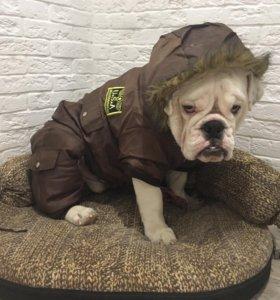 Куртка комбинезон для собаки