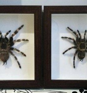 Багета с пауками