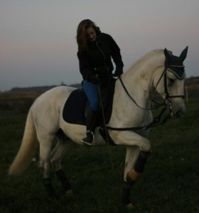 Тренировки по конному спорту, прогулки в полях