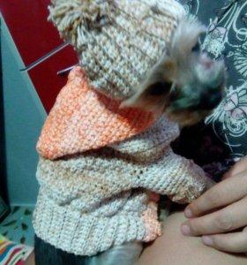 Вязаная одежда для домашних животных
