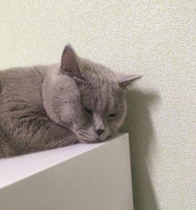 Вязка кот