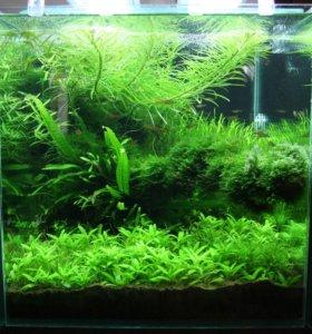 Нано-аквариум