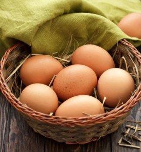 Яйцо куриное (домашнее)