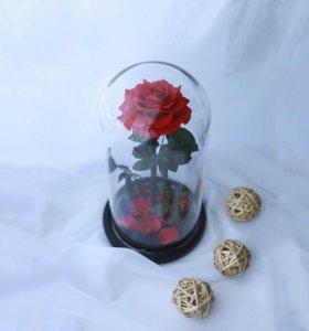Para Ella - Живая Роза в стеклянной колбе! King!