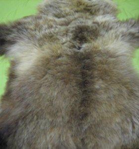 Шкура камчатского бурого медведя