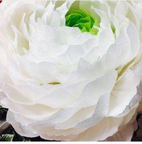 Цветы для торжеств , свадеб и фотосессии аренда