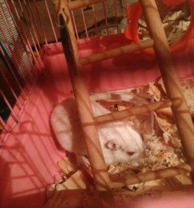 Крыса-мышь