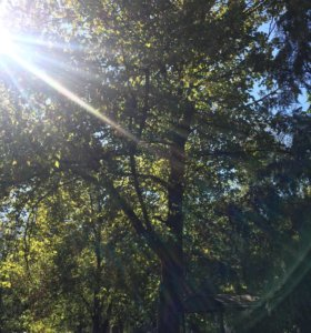 Спилил деревьев в труднодоступных местах