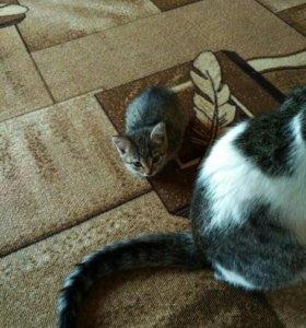 Отдам котенка- кошечку