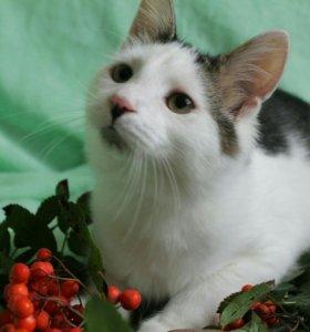 Котята 4,5месяца