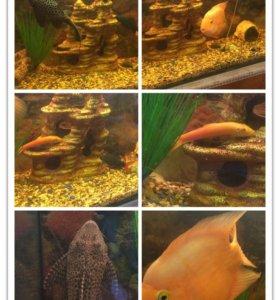 Продам аквариум со всем содержимым!!200 л