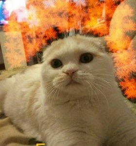 Котенок ( кошка) 5 мес.