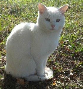 Чудо - кот с ангельским характером в ДАР