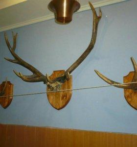 Медальоны для охотничьих и рыболовных трофеев