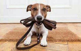 Помогу с выгулом собак