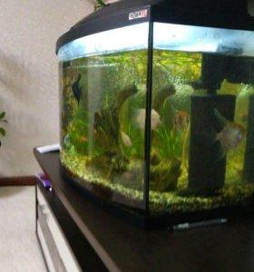 Аквариум с рыбками, оборудован всем необходимым.
