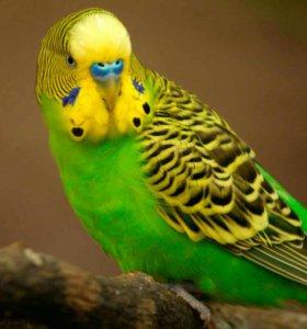 Корм для волнистых попугаев с орехом Семь семян