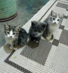 Кошечки 🐈