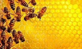 Мёд липовый урожай 2017 года. Мед с личной пасеки