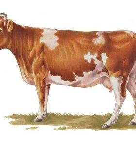 продам корову,козу,овечку