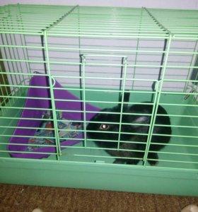 Продам карликого кролика