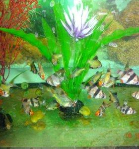 Рыбки аквариумные широкий ассортимент