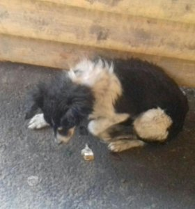 Отдам милого щенка нашёл на улице откормил