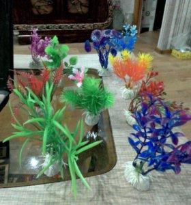 Растения за штуку