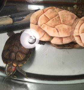 Красноухая черепаха и аквариум