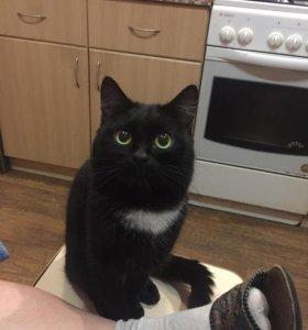 Кот чёрный