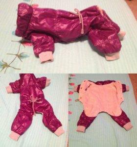 Одежда для мини собачек