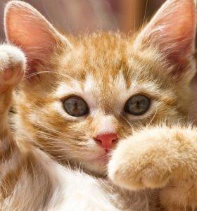 Отдам даром котят в хорошие руки