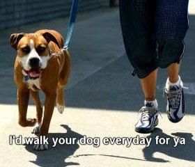 прогулка собак для то во у ко во нет времени