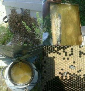 Вкуснейший мед с собственной пасеки.