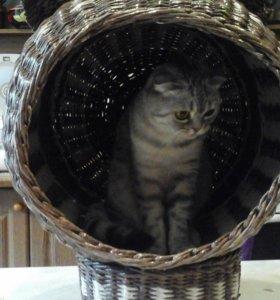 Сплету кошкин дом
