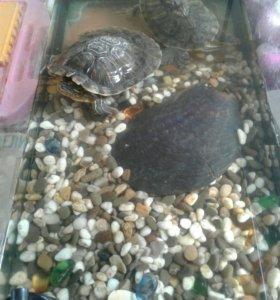 Аквариум с 2 черепахами