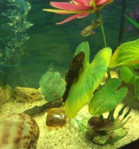 Надоело часто мыть аквариум?