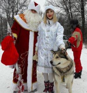 Аниматоры. Научное шоу.Дед Мороз и Снегурочка.