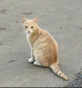 Рыжий котёнок, девочка