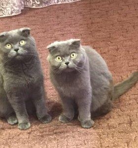 Взрослые кот и кошка