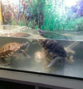 Черепахи+аквариум+оборудование