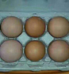 Козье молоко,яйцо