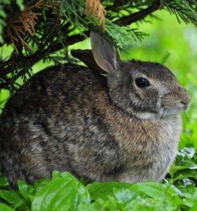Продам кролика для завода,здоровый,на шесть кг
