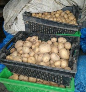 Домашний картофель для животных.