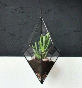 Декоративный флорариум